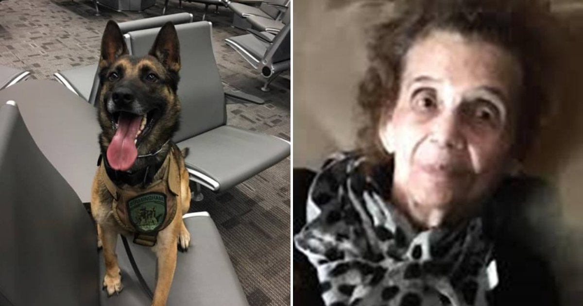 saby5.png?resize=1200,630 - Hero Dog Finds 90-Year-Old Woman With Dementia Who Was Lost In The Woods