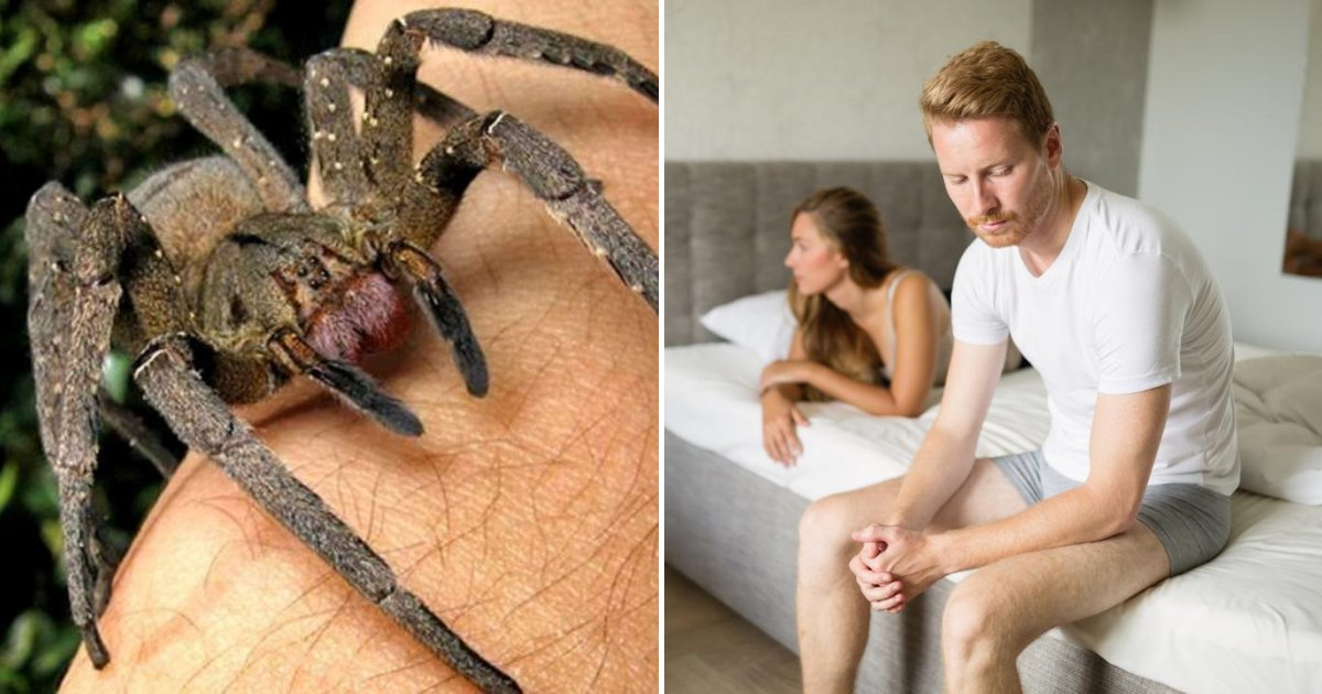 spider3.png?resize=412,232 - Spider Venom Could Be Way Better Than Viagra For Treating Erectile Dysfunction