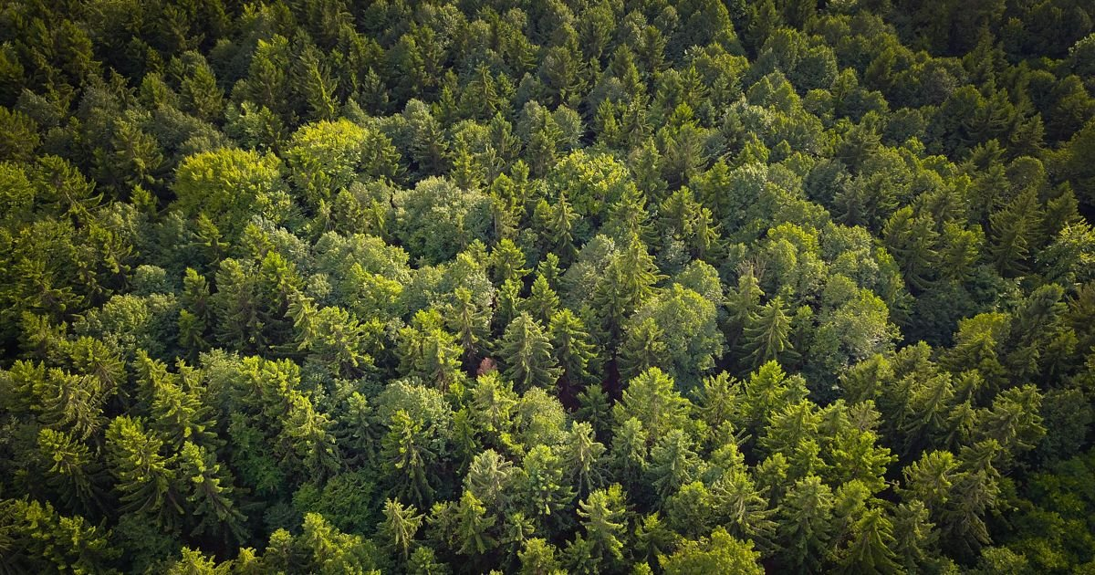 tress.jpg?resize=1200,630 - CO2 Levels Have Gone So High That Planting Trees Won't Save Us From Global Warming