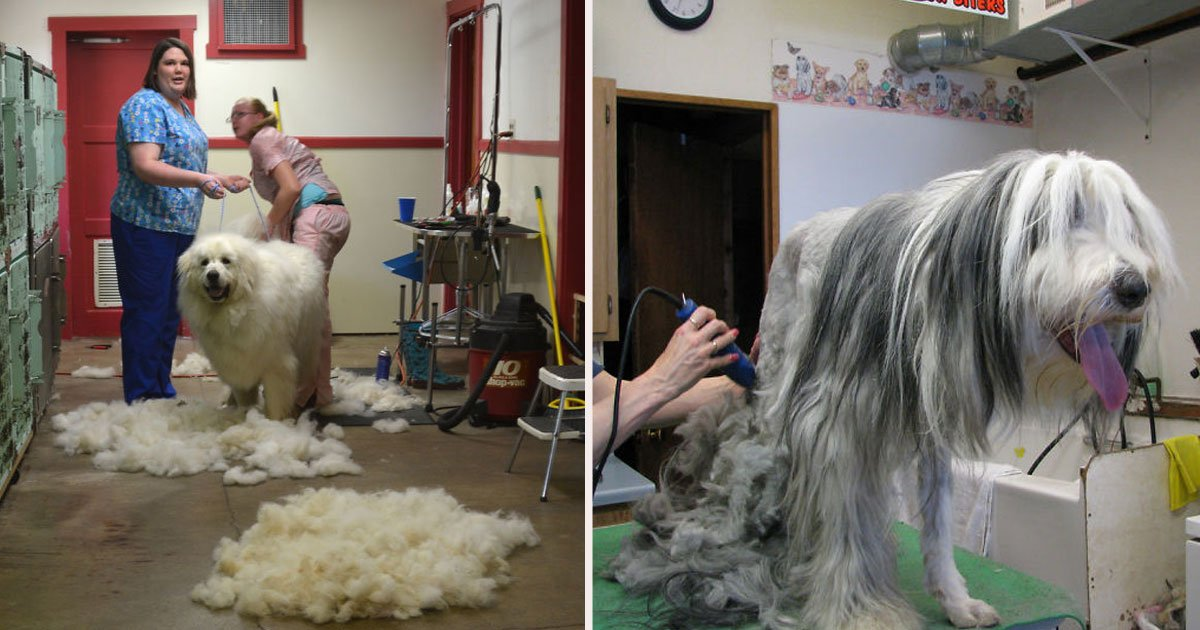 untitled 1 20.jpg?resize=412,232 - Groomer Gets Tired Of People Asking Why Her Services Cost More Than A Hairdresser, Puts Hilarious Poster For Customers