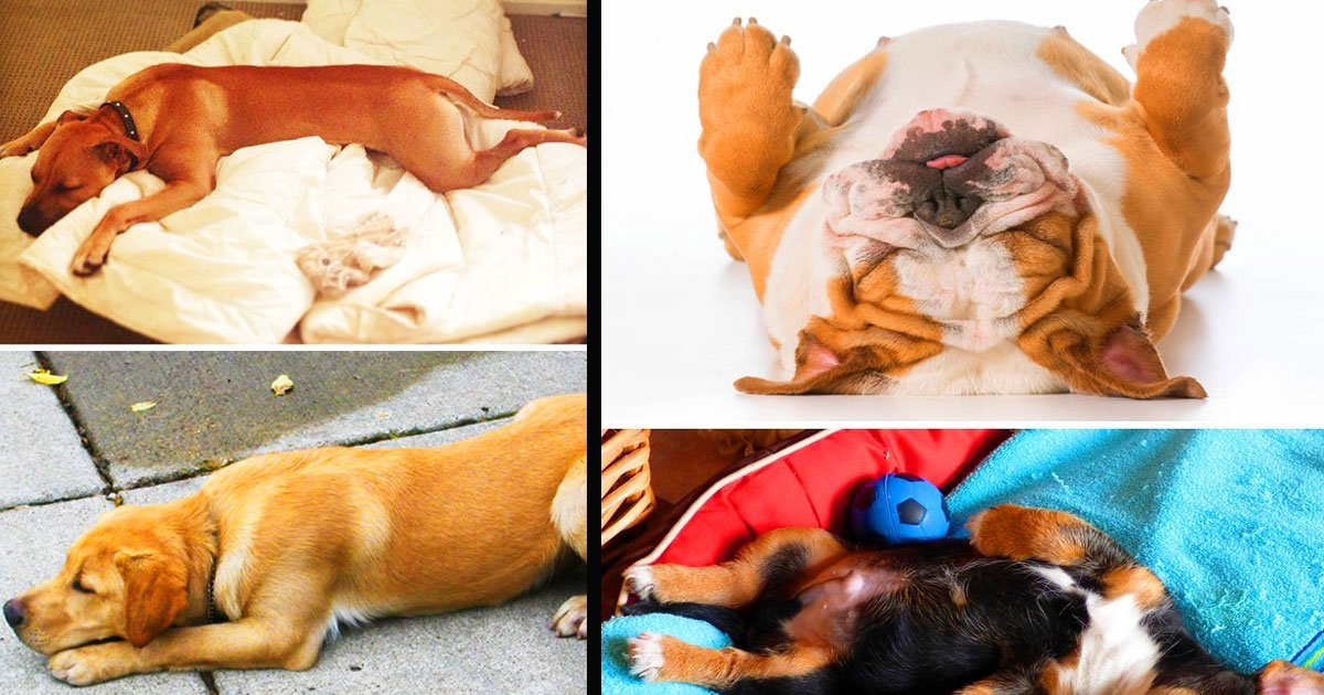 untitled 1 44.jpg?resize=1200,630 - What Your Dog's Sleeping Position Says About His Personality