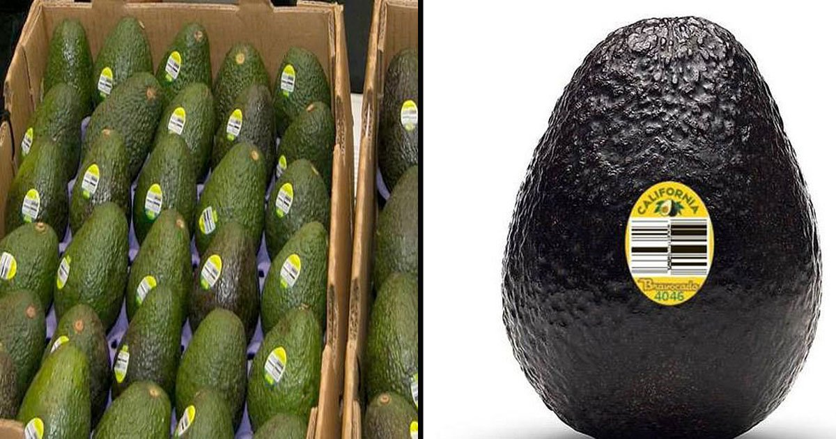 untitled 1 63.jpg?resize=1200,630 - Avocados Are Being Recalled In 6 States Over Listeria Concerns