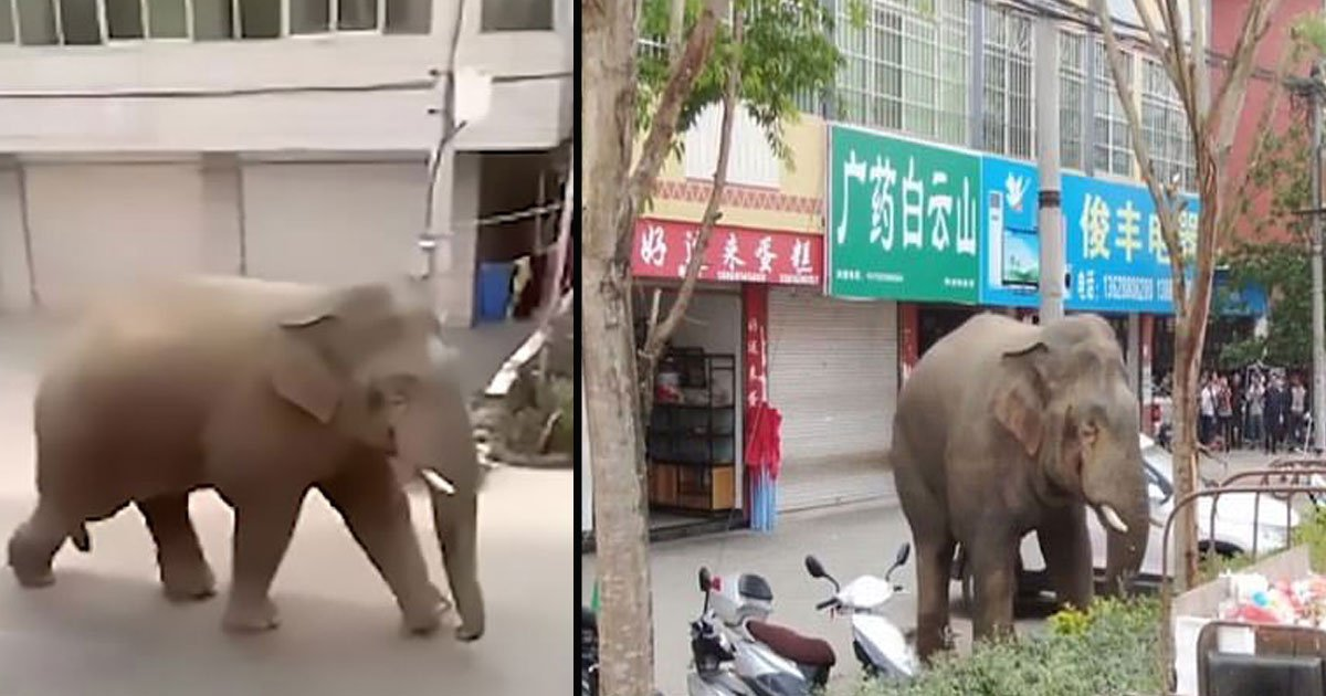 untitled 1 74.jpg?resize=1200,630 - Angry Wild Elephant Destroys Cars And Houses In China After Failing To Find A Girlfriend To Mate