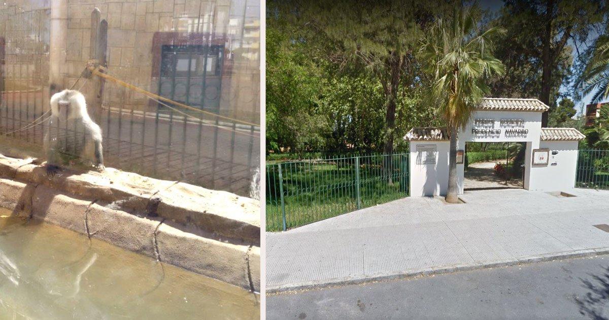 untitled 1 79.jpg?resize=1200,630 - Animals Struggle To Survive At Abandoned Spanish Zoo