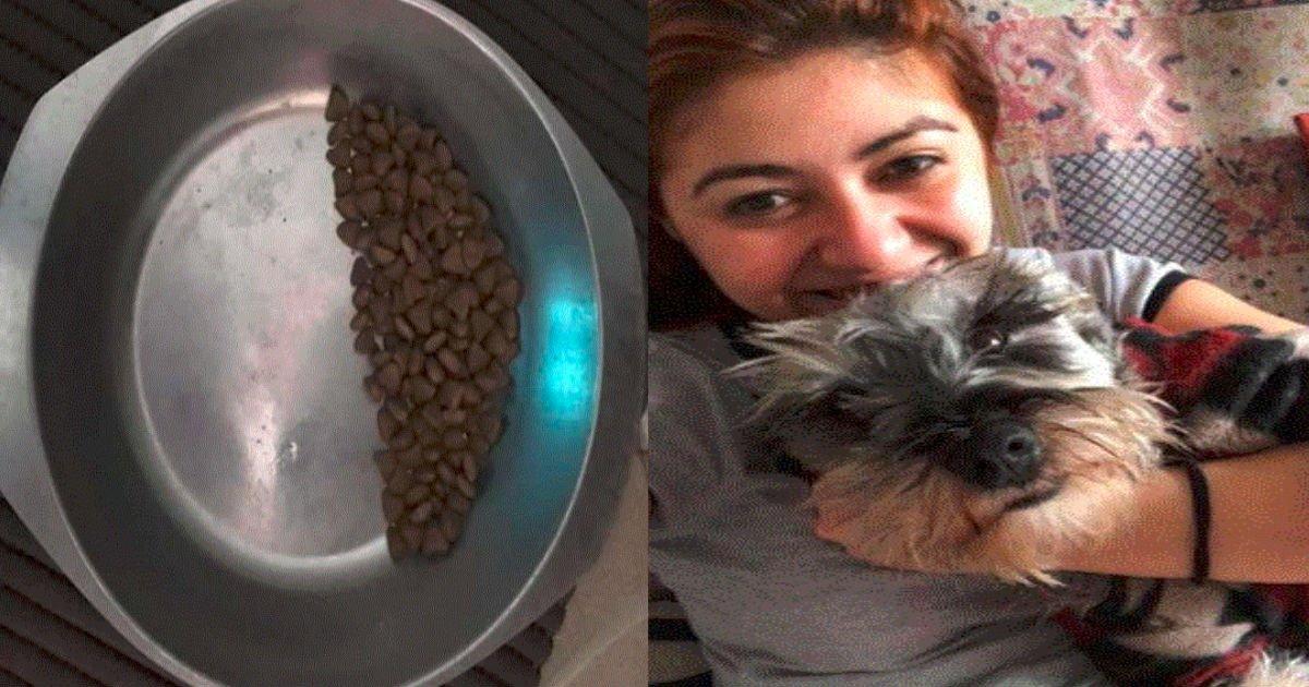 untitled 28.jpg?resize=412,232 - 常に半分しか食べない捨て犬…。それに潜む寂しい過去とは!?