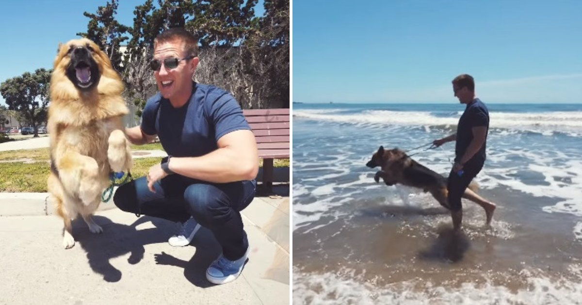 """untitled design 16.png?resize=1200,630 - Un chien abandonné saute et """"hurle"""" quand il voit l'océan pour la première fois"""