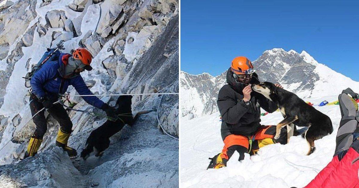 untitled design 38.png?resize=300,169 - Un chien errant suit une équipe d'expédition et devient le premier chien à avoir franchi l'Himalaya