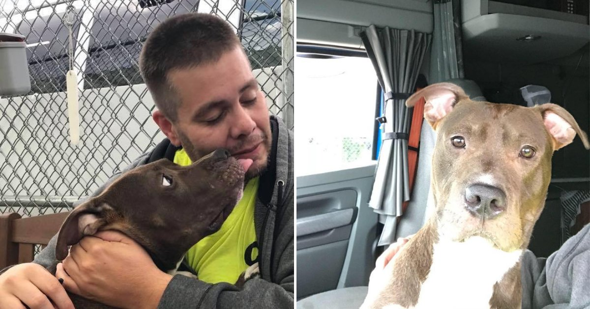 untitled design 42.png?resize=412,232 - Man Drives Nearly 3,000 Miles To Rescue Dog From Getting Euthanized