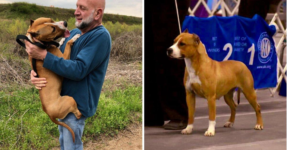 untitled design 44 1.png?resize=412,232 - Un chien de concours âgé de 10 mois disparaît mystérieusement à l'aéroport