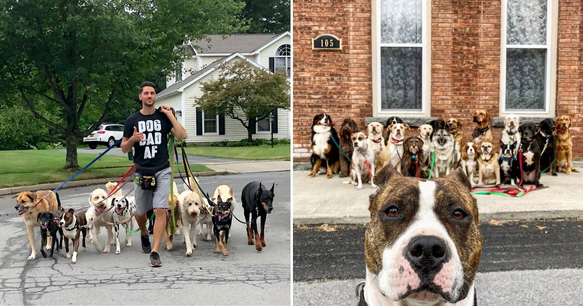 untitled design.png?resize=412,232 - Un promeneur de chiens partage des photos touchantes qu'il prend avec sa meute tous les jours
