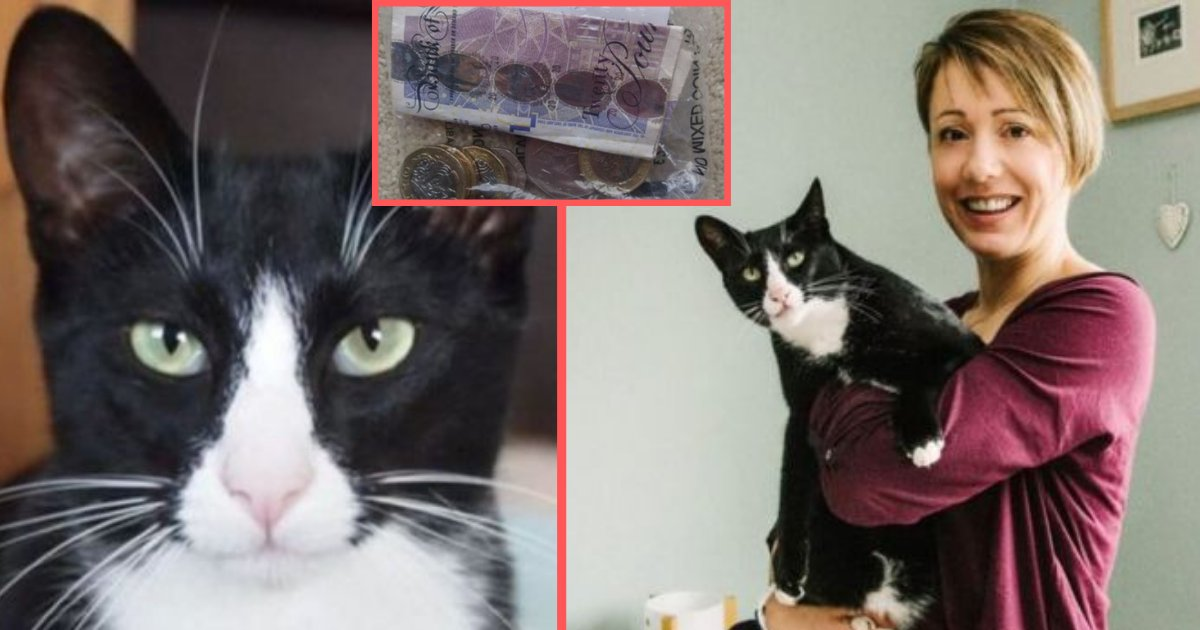 y3 3.png?resize=1200,630 - Burgler Cat Theo Steals Money That The Neighbor Kept For The Milkman