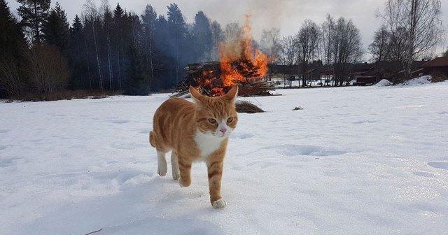Cat walking away from a fire