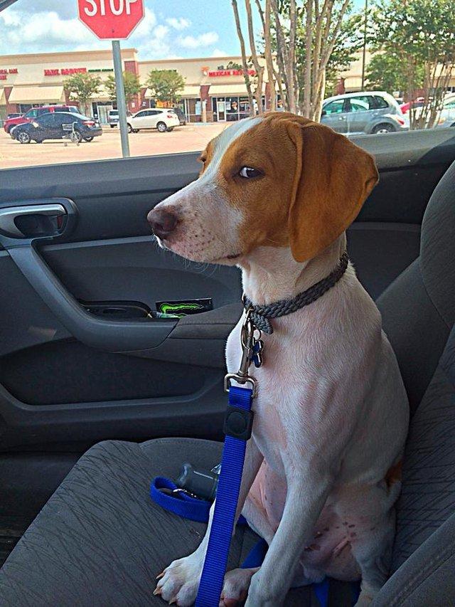 Dog giving side-eye