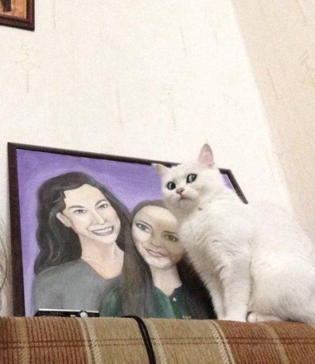 Cat giving side-eye