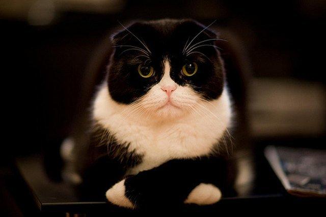Cat looking cross
