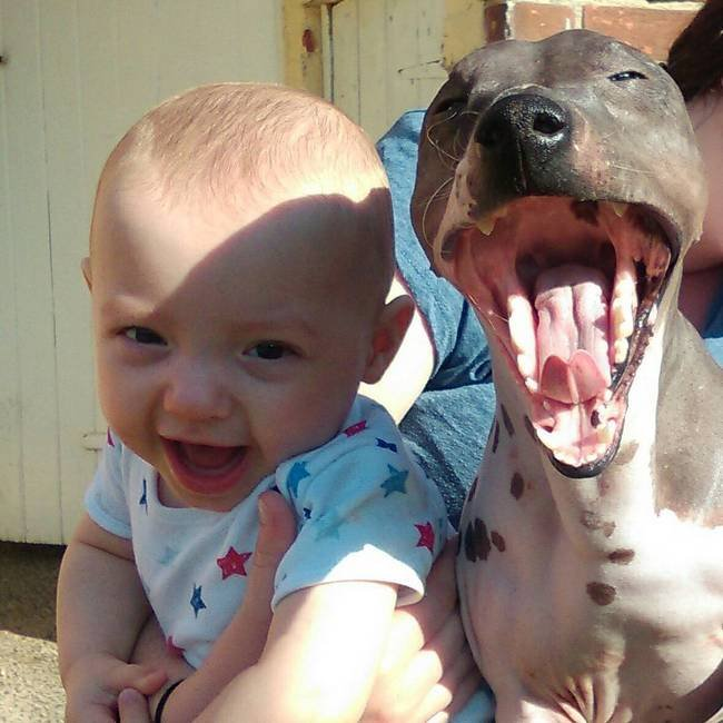 cachorro-crianca-10