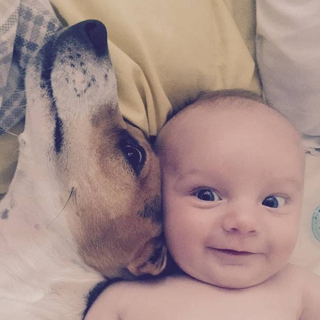 cachorro-crianca-4
