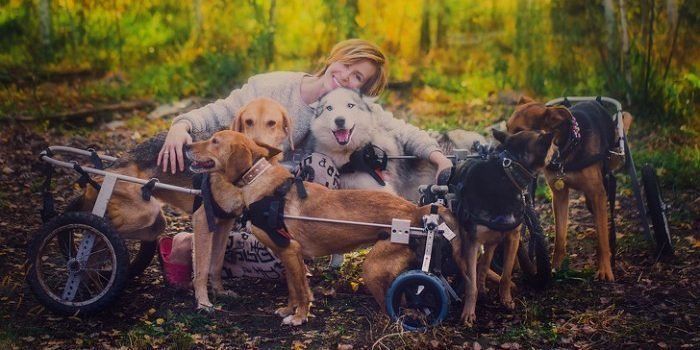 17 5c66b5d508f33  700 e1556256013284.jpg?resize=412,275 - 100 Sick Dogs Finds New Life With The Care Of A Famous Russian Photographer