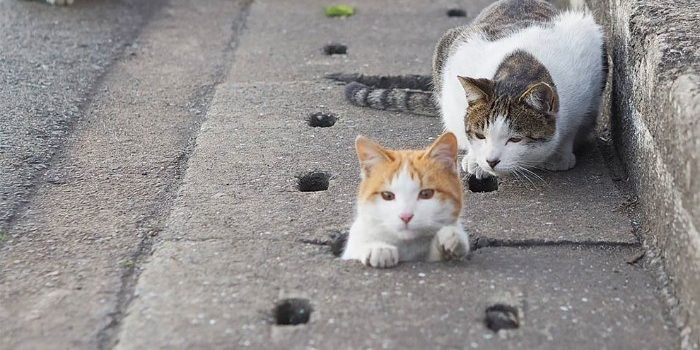 18 5c6bbd7061f19  700 e1556256960225.jpg?resize=412,275 - Stray Cats Who Just Cant Get Out Of Drain Pipes