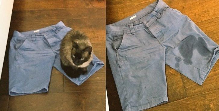 22 gatos cretinos 13012810 14 1538488665 728 dba34213de 1539644923 e1555996107703.jpg?resize=1200,630 - 22 Fotos que demuestran que los gatos pueden ser unos verdaderos cretinos