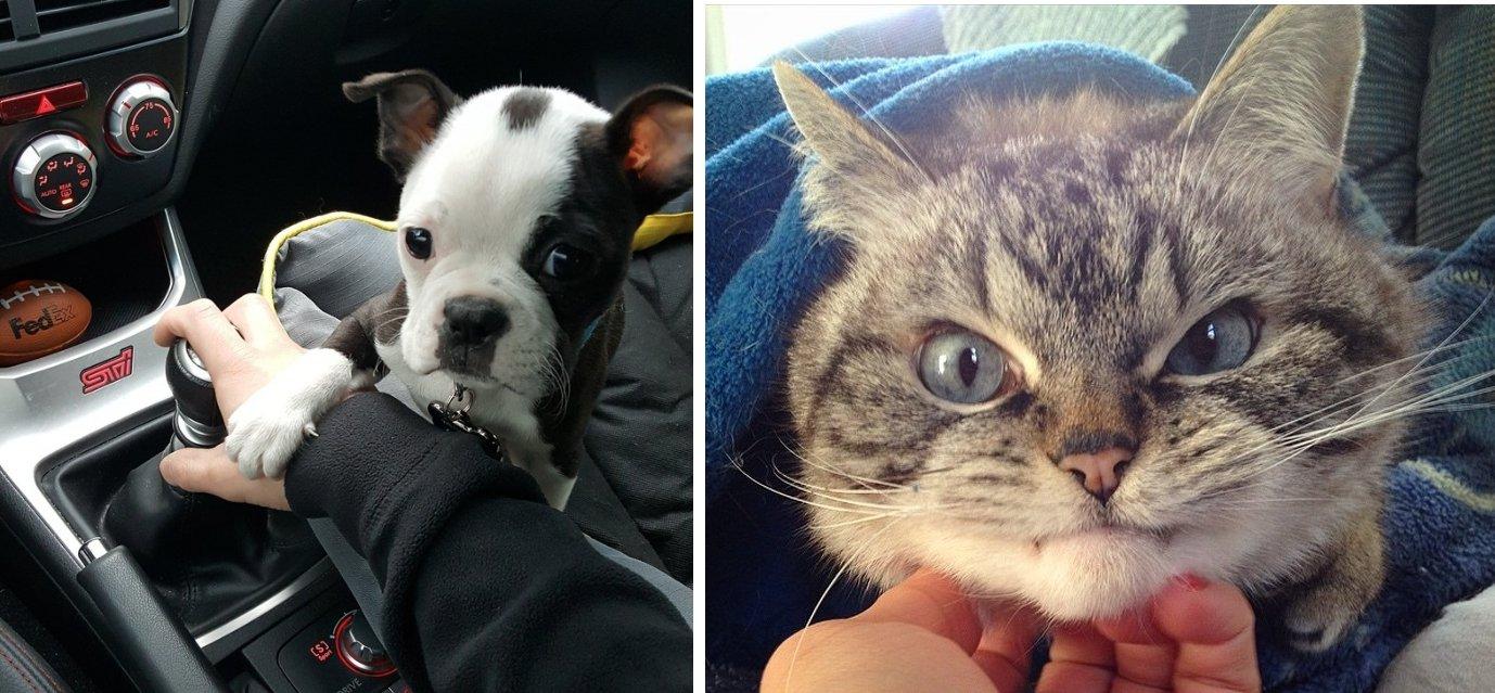 4069160 image crop 640x559 1534160102 728 f85ae5f054 1534311562 1.jpg?resize=412,232 - 23 Fotos que retratan los extraños hábitos de perros y gatos que para ellos son de lo más normal