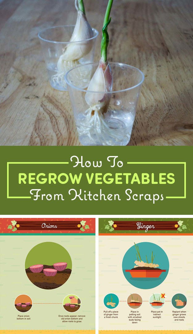 Here's how to regrow vegetables from kitchen scraps.