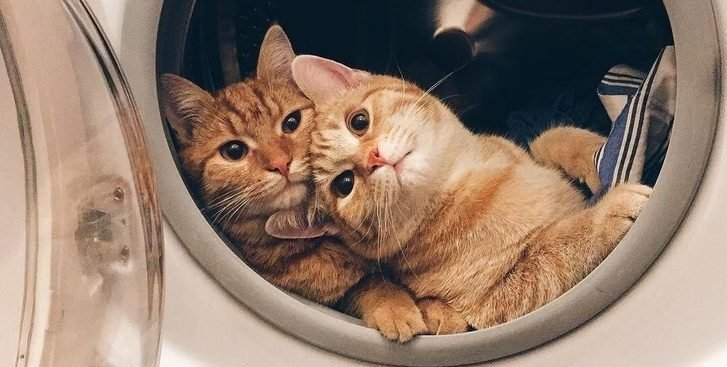 498560 ncc8h0stnoztvgnpwbxm51vsh ne5ldrgmsre0ezb 8 1526296364 728 0306414a55 1526323099 e1554432463615.jpg?resize=412,232 - 21 Times Cats Had Us Grinning From Ear to Ear