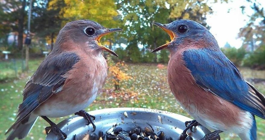 8 5c7da9b1f0946  880 e1555054248614.jpg?resize=636,358 - Woman Sets Up A Photo Booth For Birds In Her Yard And Gets Stunning Photos