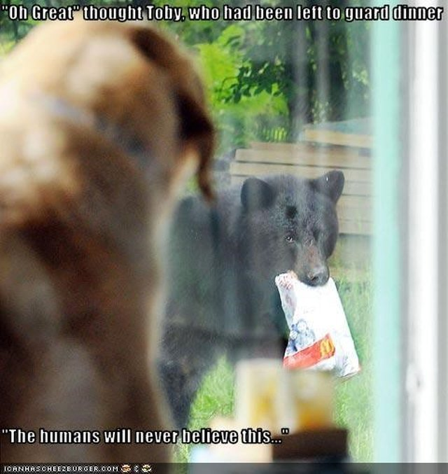 Dog watches bear steal food.