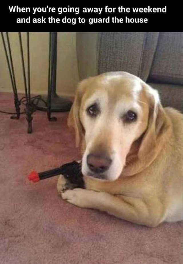 Dog holding toy pistol.