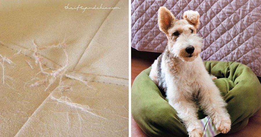 a1 16.jpg?resize=1200,630 - 15 Truques que ajudarão você a cuidar melhor de seu cachorro