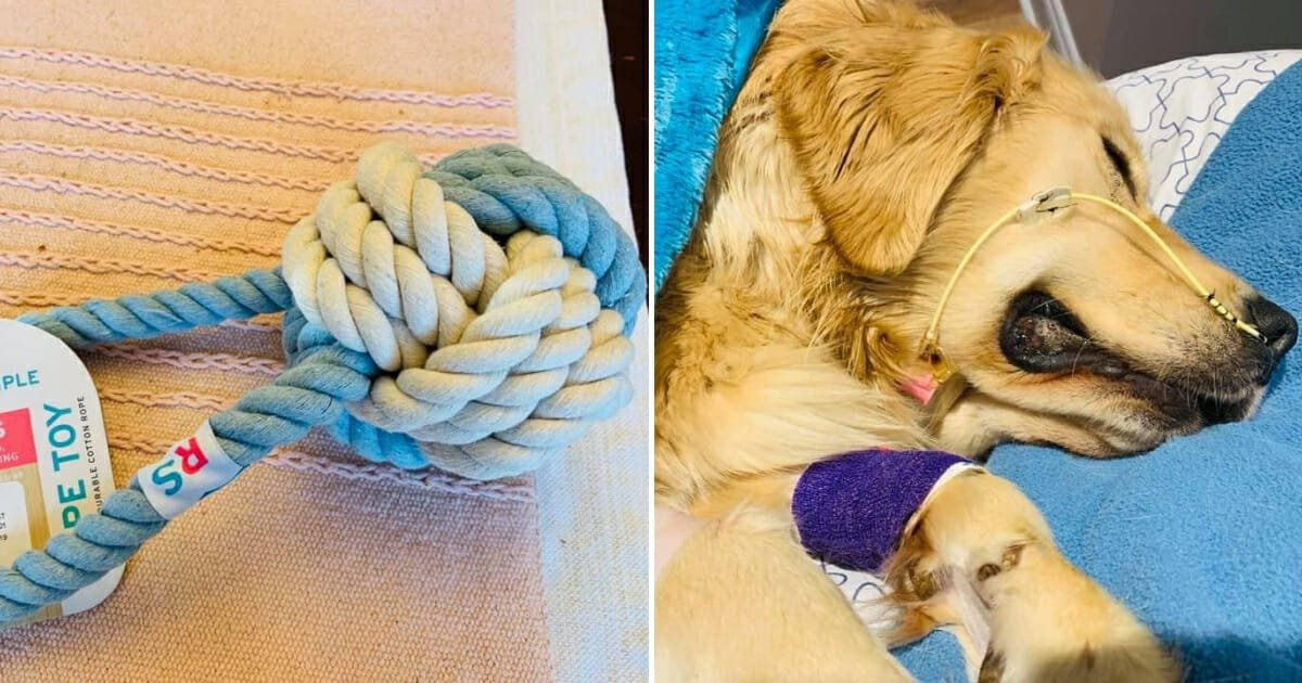 aa.jpg?resize=1200,630 - Heartbroken Owner Shared Warning About Rope Toys After Her Golden Retriever Passed From Eating Them