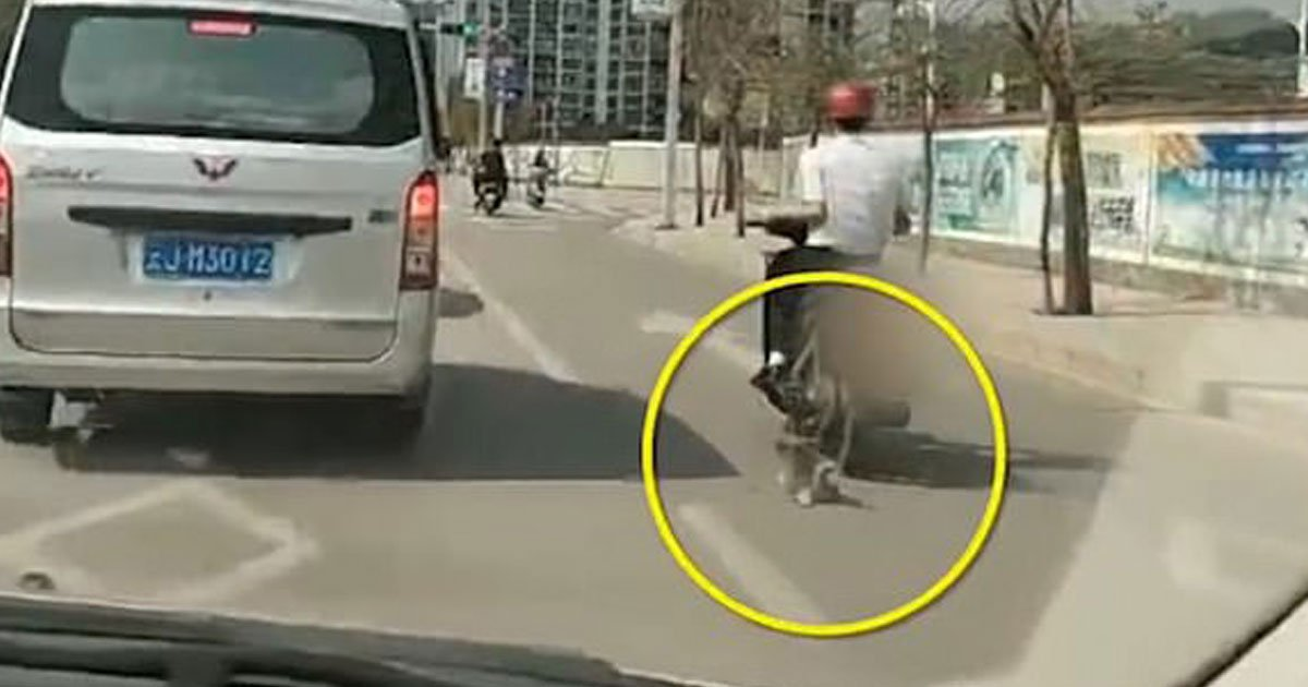 abused dog.jpg?resize=412,232 - Video Of A Man Dragging A Pet Husky Behind His Scooter Using A Leash Sparked Outrage