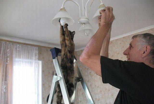 Cat changing lightbulb.