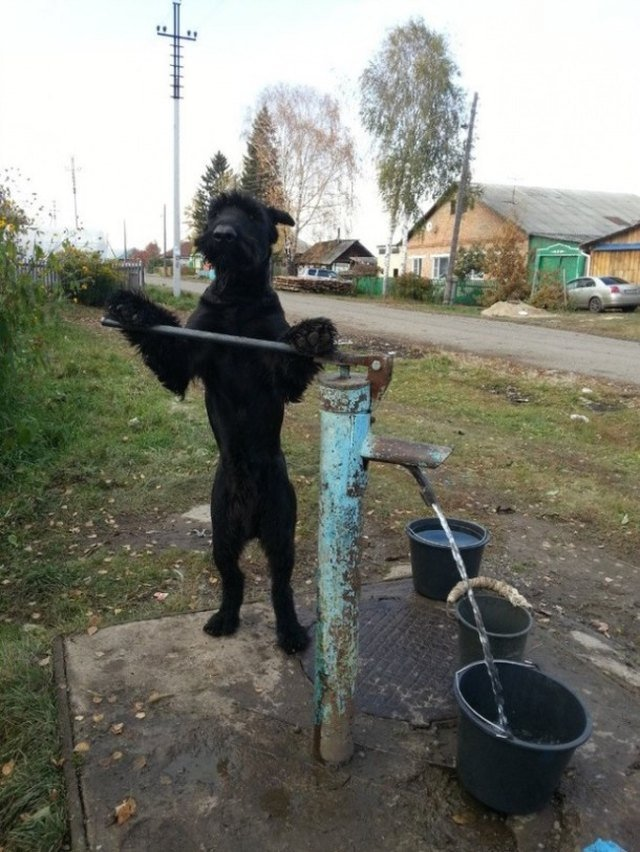 Animals Helping Around House
