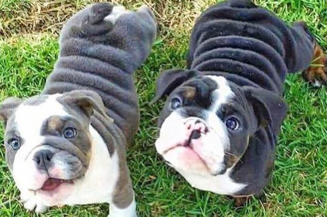 25 Chubby Puppies You Need to Snuggle Right Now