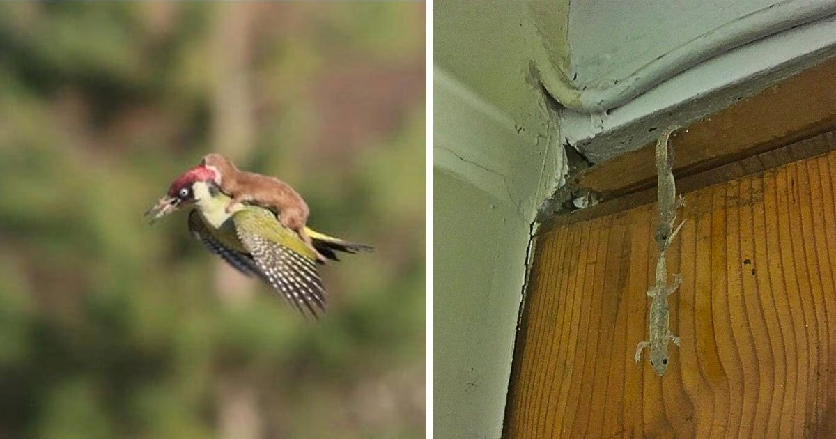 animals saving each other.jpg?resize=412,232 - 15+ Hilarious Animals Saving Each Other In The Best Ways Possible
