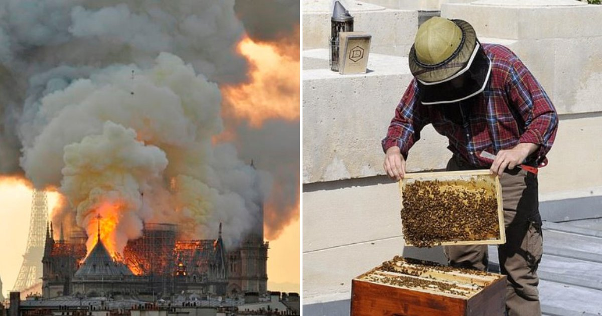 bees.png?resize=1200,630 - Notre Dame's Bees Kept In Rooftop Hives Miraculously SURVIVED The Fire