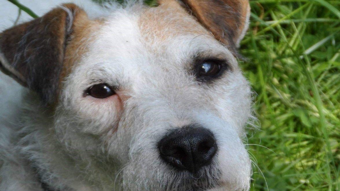 billy.jpg?resize=412,232 - Bourgogne: Le chien Billy est enfin sauvé de la canalisation