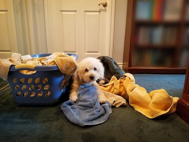 Laundry Day