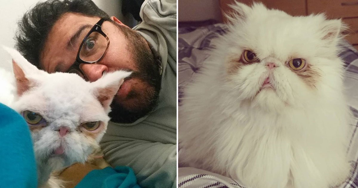 cat transformation.jpg?resize=1200,630 - Incredible Transformation Of A Persian Cat Who Was Neglected By The Owner