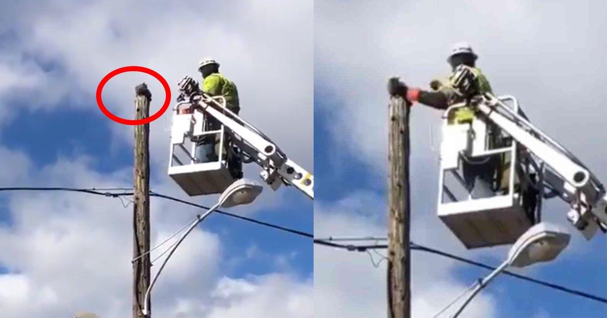 catonpole.jpg?resize=412,232 - 電柱から降りられない猫を助けた男性作業員に◯◯処分…その処分に対し抗議の声をあげる人々