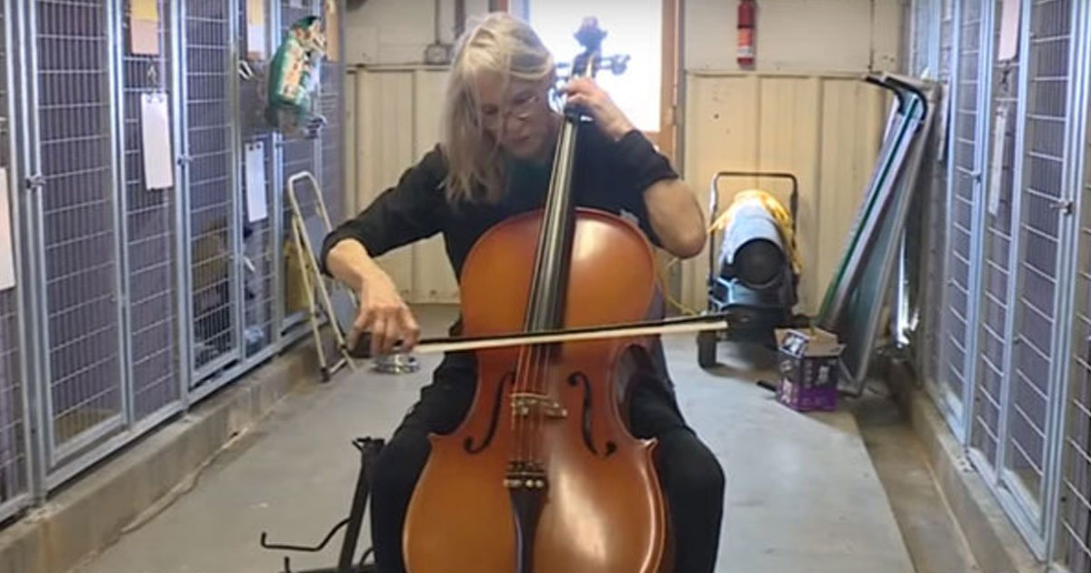 cello 4 dogs.jpg?resize=412,232 - Woman Plays Cello At A Shelter To Comfort Anxious Shelter Dogs