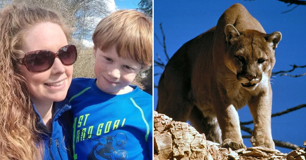 cougar2.png?resize=1200,630 - Mother Bravely Opened Cougar's Mouth With Bare Hands To Save 7-Year-Old Son