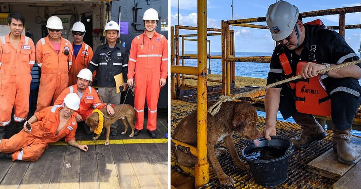 d1 9.png?resize=1200,630 - A Pooch Travelled Nearly 135 Miles Off the Shore But Was Luckily Rescued by the Oil Rig Workers