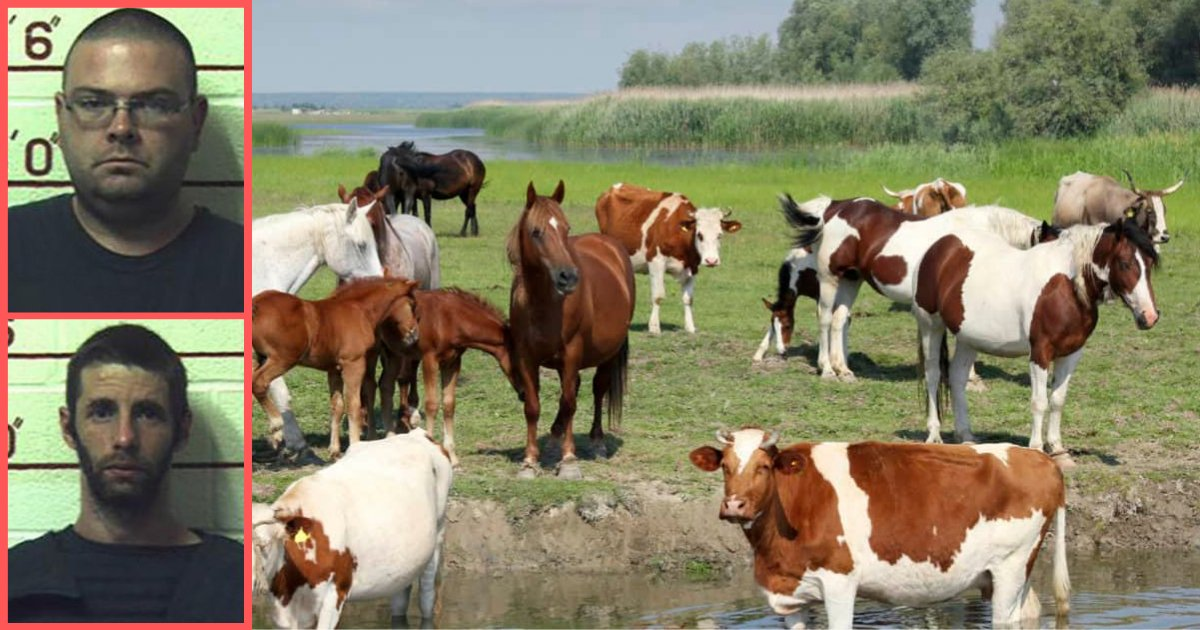 d2 17.png?resize=1200,630 - 3 Men Jailed for Getting Intimate With Horses, Cows, Dogs, and Goats at Their Makeshift Farm