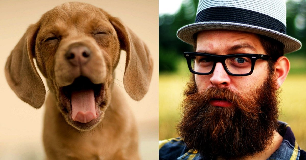d2 8.png?resize=1200,630 - A Recent Study Has Shown That Bearded Men are Prone to Carry More Harmful Germs Than A Dog