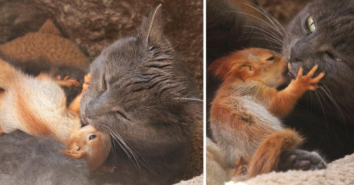 d3 21.png?resize=188,125 - Un chat adopte 4 bébés écureuils comme ses bébés