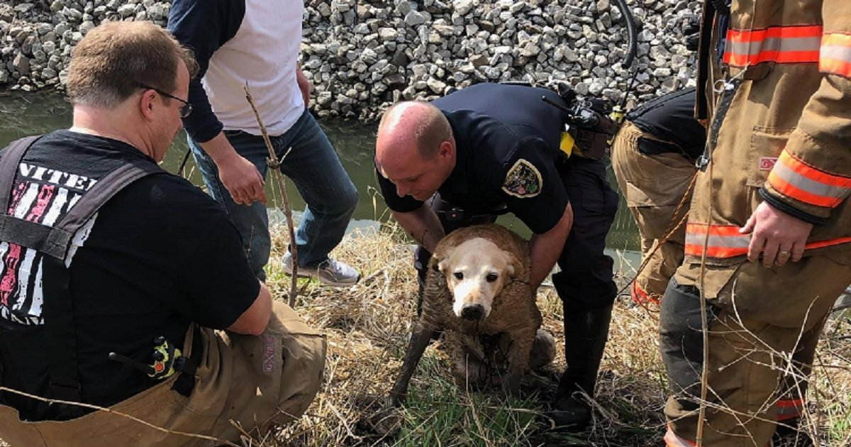 d3 5.jpg?resize=412,232 - First Responders Rescued A Senior Dog From An Icy Creek Just In Time