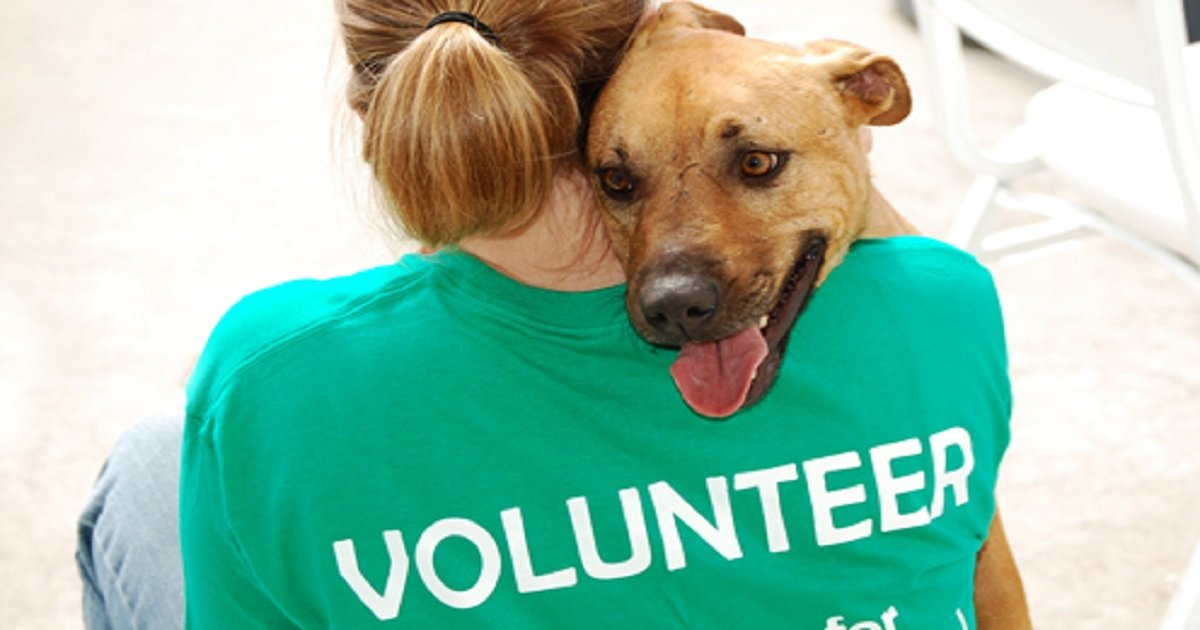 d3 6.jpg?resize=1200,630 - Volunteer Shared Her Heartbreaking Experience At The Animal Rescue Shelter